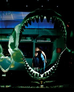 Florida Museum Of Natural History - Attractions/Entertainment, Reception Sites - SW 34th St & Hull Rd, Gainesville, FL, United States