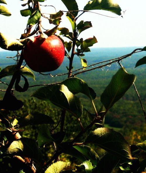 Mountain orchard wedding