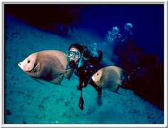 Deep Sea Diving: Carey Dive Center - Attraction - 13 Matamoros, Isla Mujeres, Q.r., Mexico