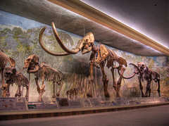 UNL State Museum - Morrill Hall & Mueller Planatarium - Attraction - N 14th St & Vine St, Lincoln, NE, United States