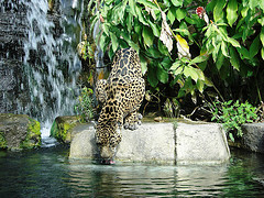 Jacksonville Zoo and Gardens - Attraction - 370 Zoo Parkway, Jacksonville , Fl, 32218, United States