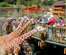 Cheyenne Mountain Zoo - Attraction - Cheyenne Mountain Zoo, Colorado Springs, CO 80906, US