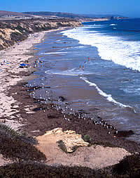 Crystal Cove State Beach - Beaches, Attractions/Entertainment - Crystal Cove, CA, Crystal Cove, California, US