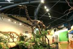 Rocky Mountain Dinosaur Resource Center - Attraction - 201 South Fairview Street, Woodland Park, CO, 80863, United States