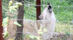 Colorado Wolf and Wildlife Center - Attraction - 4729 Lower Twin Rocks Rd, Divide, CO, 80814, United States