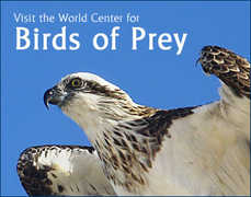 World Center For Birds of Prey  - Attraction - 5668 West Flying Hawk Lane, Boise, ID, United States