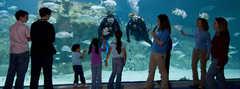North Carolina Aquarium at Pine Knoll Shores - Attraction - 1 Roosevelt Boulevard, Pine Knoll Shores, NC, United States