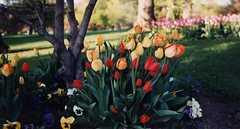 Washington Park - Attraction - Washington Park, Albany, NY, Albany, New York, US