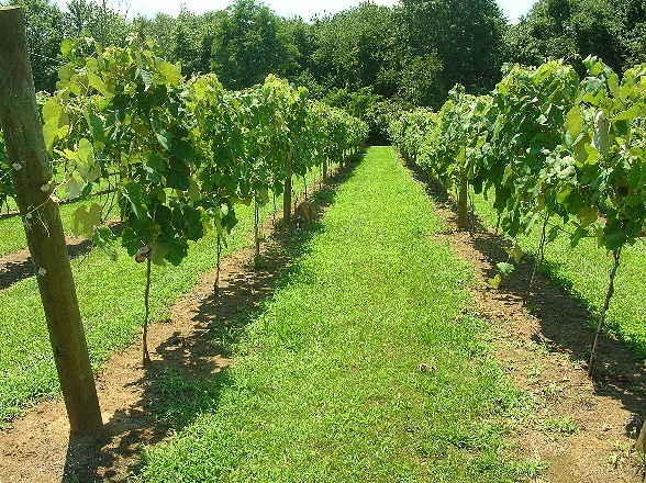 Cream Ridge Winery - Wineries - Cream Ridge, NJ