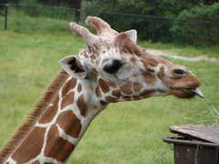 Jacksonville Zoo and Gardens - Zoo/Park - 370 Zoo Parkway, Jacksonville , Fl, 32218, United States