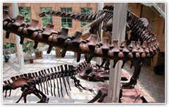 Fernbank Museum-Natural History - Attraction - 767 Clifton Rd Ne, Atlanta, GA, United States