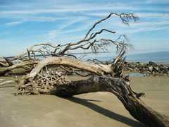 Driftwood Beach - Attraction -