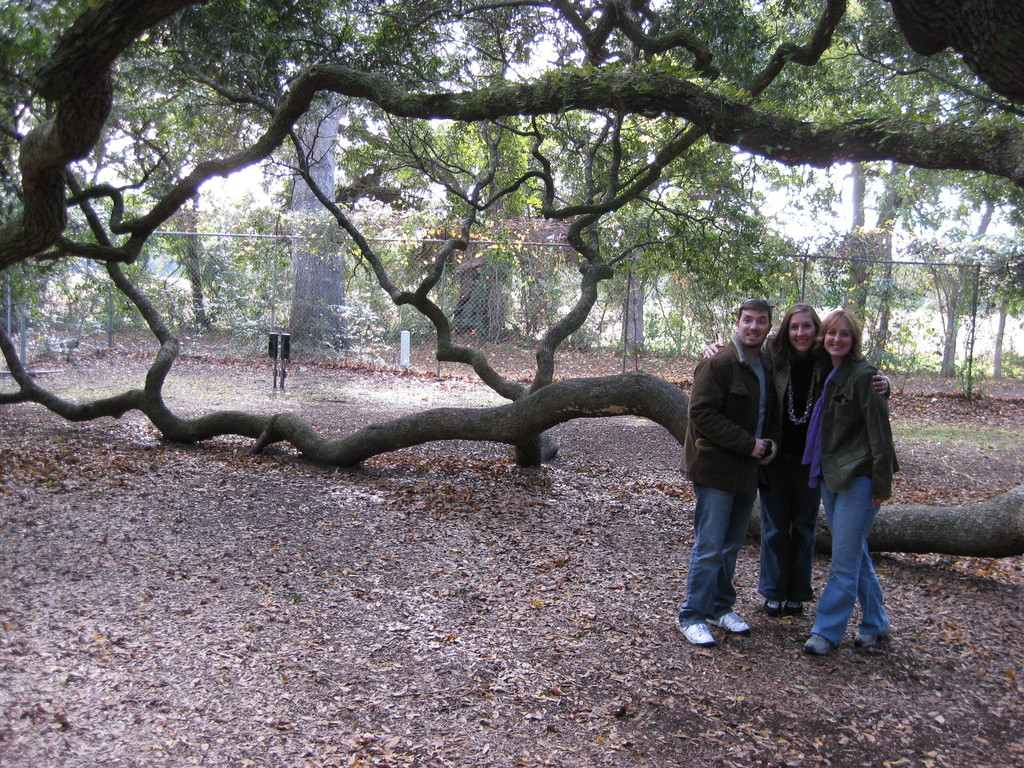 The Angel Oak Tree - Attractions/Entertainment - 3688 Angel Oak Road, Johns Island, SC