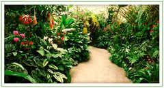 Marie Selby Botanical Gardens - Attraction - 811 South Palm Avenue, Sarasota, FL, 34236, USA