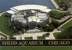 John G Shedd Aquarium - Attraction - 1200 S Lake Shore Dr, Chicago, IL, USA