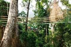 Tree Top Adventure - Attraction -