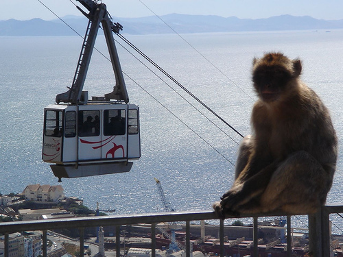Cable Car Top Station - Attractions/Entertainment -