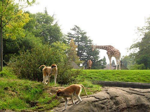 Woodland Park Zoo - Attractions/Entertainment, Parks/Recreation, Ceremony Sites - 601 N 59th St, Seattle, WA, United States
