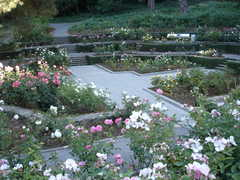 Rose Garden - Ceremony - 700 Jean Street, Oakland, CA, 94610, United States