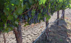 Temecula - Wine Country - Attraction - Temecula, CA