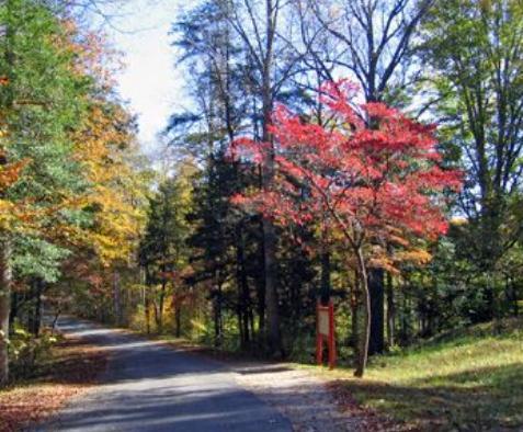 Spotsylvania Battlefield - Attractions/Entertainment - Brock Road, Spotsylvania, VA, 22553, US