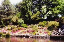 Crystal Springs Rhododendron Garden - Attractions/Entertainment, Ceremony Sites, Reception Sites, Parks/Recreation - 28th Ave & SE Woodstock, Portland, OR, United States