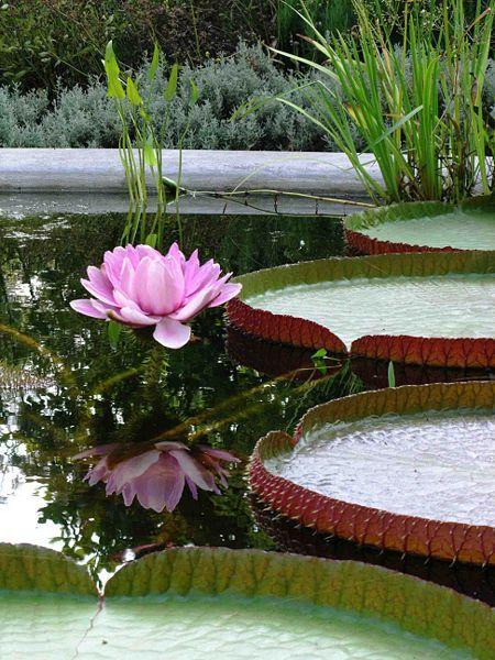 Hortus Botanicus Amsterdam - Reception Sites - Plantage Middenlaan 2, Amsterdam, Nederland
