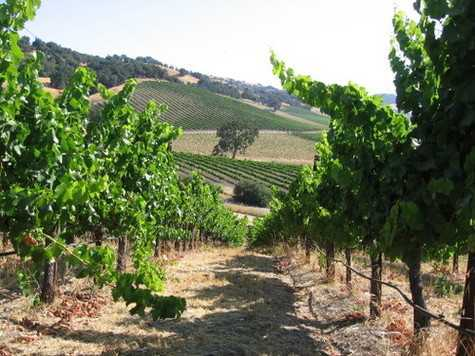 Pear Valley - Wineries, Reception Sites, Ceremony Sites - 4900 Union Road, Paso Robles, CA, United States
