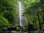 Manoa Falls - Attraction - M?noa Falls, US