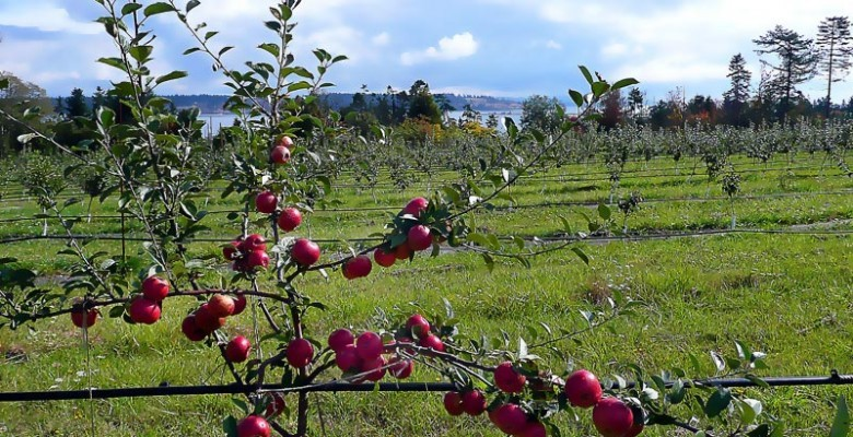 Sea Cider Farm And Ciderhouse - Reception Sites - 2487 Mt St Michael Rd, Saanichton, BC, V8M 1T7
