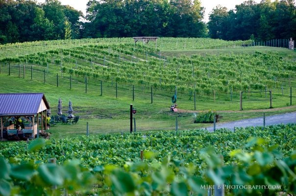 Running Hare Vineyard - Reception Sites - 150 Adelina Rd, Prince Frederick, MD, 20678
