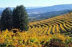 Heitz Cellar Winery - Vineyards - 436 Saint Helena Hwy S, St Helena, CA