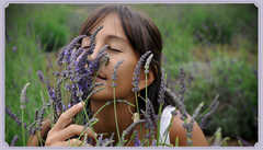 The Lavender Farm Inc. - Attraction - 1100 Waipoli Road, Kula, Maui, Hawaii, 96790, USA