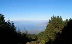 Polipoli State Park - State Parks - Kula, Hawaii, United States