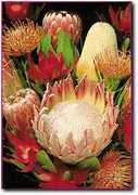 Sunrise Protea Farm - Attraction - 16157 Haleakala Highway, Kula, HI, United States