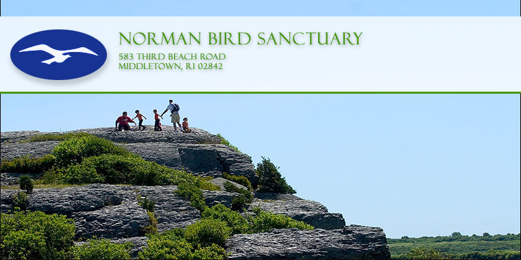Norman Bird Sanctuary - Parks/Recreation, Attractions/Entertainment - 583 3rd Beach Rd, Newport County, RI, 02842, US