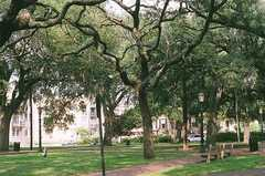 Oglethorpe Square - Ceremony - Abercorn  St, State St, Savannah, Georgia, United States