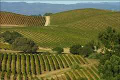 Artesa Vineyards & Winery - Wine Tasting Recommendation - 1345 Henry Road, Napa, CA, United States