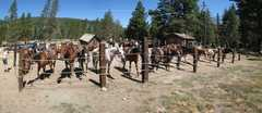 Alpine Meadows Stables - Attraction - 355 Alpine Meadows Rd, Alpine Meadows, CA, United States