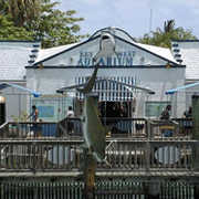 Key West Aquarium - Attraction - 1 Whitehead St, Key West, FL, 33040