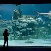 North Carolina Aquarium at Pine Knoll Shores - Attraction - 1 Roosevelt Boulevard, Pine Knoll Shores, NC, United States
