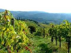 Colli Fiorentini Area - Wine Tours -