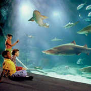 Virginia Aquarium & Marine Science Center - Attraction - 717 General Booth Blvd, Virginia Beach, VA, United States