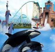 Sea World - Things To Do - Sea World, San Diego, CA, US