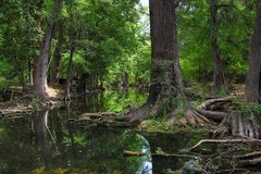 Cibolo Nature Center - Ceremony Sites, Attractions/Entertainment, Reception Sites - 140 City Park Rd, Boerne, TX, 78006, US