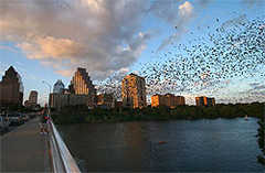 Congress Avenue Bridge - Bats - Outside Attraction - 100 Congress Ave, Austin, TX, 78701, US