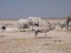 Safari Etosha Nationalpark - Safari Etosha Park - 
