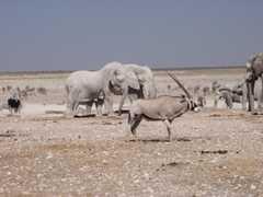 Safari Etosha Nationalpark - Safari Etosha Park -
