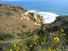 Torrey Pines State Reserve and Beach - Attraction - CA, United States
