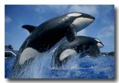 Seaworld - Attraction - 500 Sea World Dr, San Diego, CA, United States